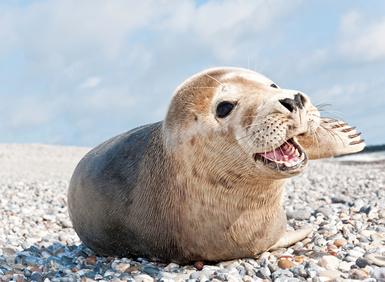 Bild eines Seehundes